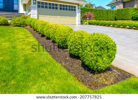 Nicely trimmed bushes in the row along the driveway to garage.  Landscape design.