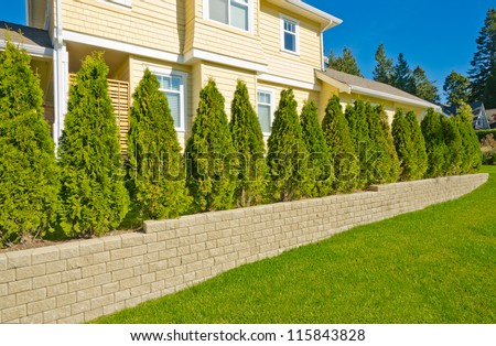 """Nicely trimmed """"Green"""" fence hedge from evergreen plants. Keeps privacy and security. Landscape trimming design."""