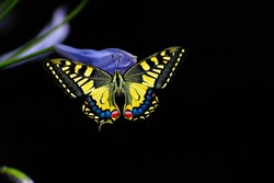 Night butterfly on black background.