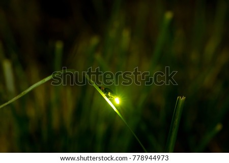 Night firefly light