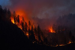 Night forest fire in California