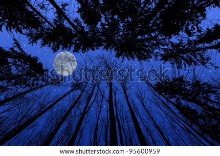 night forest with trees silhouettes