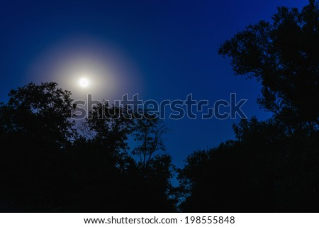night full moon through the dark branches of trees