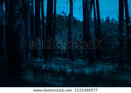 night in the forest under a dark blue sky mysteriously and no one around the exciting atmosphere of the wilderness #1122480977