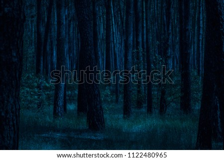 night in the pine forest moonlit moonlight grass and trees clean and no one around the scary and mysteriously exciting atmosphere #1122480965