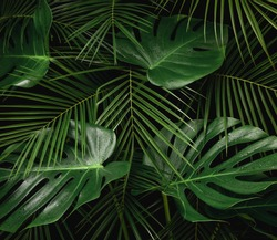 Night in tropical rainforest. Monstera and palm leaves covered with rain drops jungle pattern. Fresh green natural eco concept.