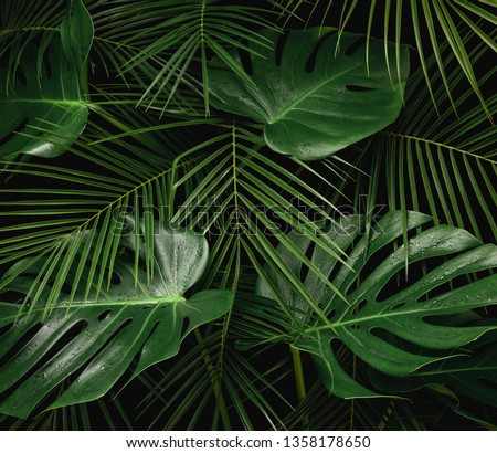 Night in tropical rainforest. Monstera and palm leaves covered with rain drops jungle pattern. Fresh green natural eco concept. #1358178650