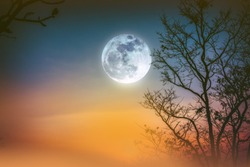 Night landscape of colorful sky, foggy is swinging between silhouette of dry tree and bright full moon. Serenity nature background. Outdoor at nighttime. The moon taken with my own camera.