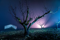 night landscape with fog and dark