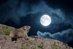 night moon portrait of marmot portrait groundhog on mountain background