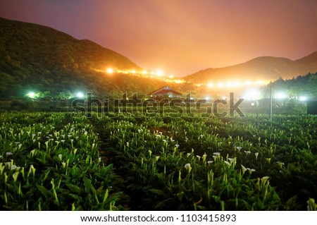 Night scenery of a calla lily flower field, a tourist farm in Yangmingshan National Park in suburban Taipei, Taiwan, with street lights of a highway glistening by the mountainside in twilight #1103415893