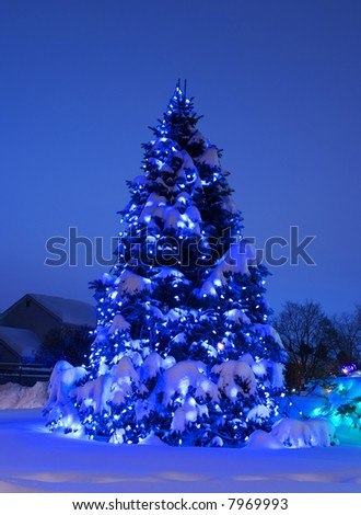 Night shot of pine tree adorned with blue Christmas lights at dusk, heavily laden with snow.