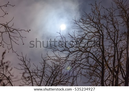 Night sky with full moon and branches of a tree