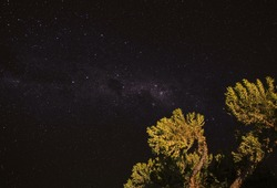 Night sky with Milkyway galaxy over small tree shrubs as seen from Anakao, Madagascar, Southern cross or crux constellation visible near Carina Nebula
