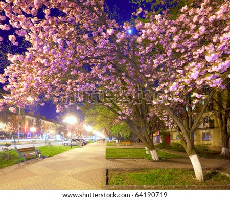 Night urban view with japanese cherry tree blossom (Uzhgorod City, Ukraine)