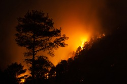 Night view of a forest fire in a steep rocky terrain. Flames, sparks and smoke rise to the sky. Silhouettes of pine trees are visible among the flames.