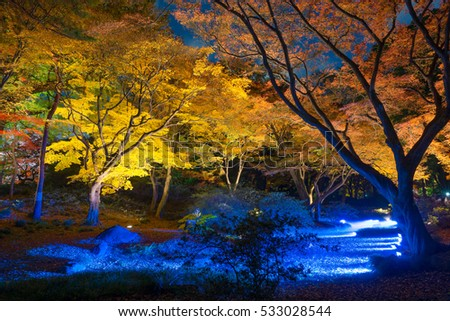 night-view of Maple  in japan