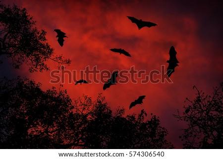 Shutterstock Night wildlife with bats. Giant Indian Fruit Bat, Pteropus giganteus, on red sunset dark sky. Flying mouses in the nature habitat, Yala National Park, Sri Lanka. horror scene with nocturnal animals.