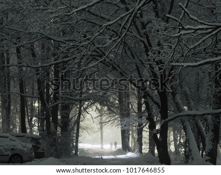 night winter landscape  park ...