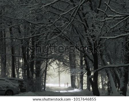 night winter landscape  park ...