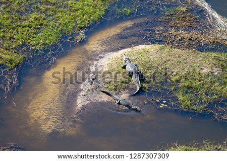Nile crocodile (Crocodylus niloticus), aerial view. Okavango aerial view, Okavango Delta, Botswana . The vast inland delta is formed from the Okavango River.