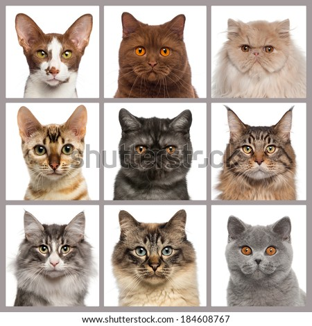 Nine cat heads looking at the camera #184608767