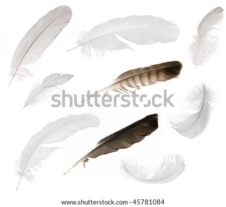 nine feathers isolated on white background