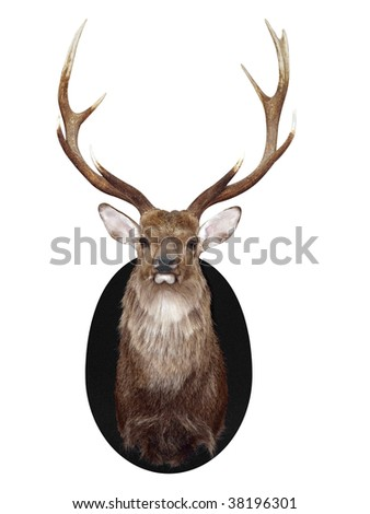 Nine Point Mounted Stag's Head isolated with clipping path