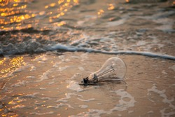 Nion bulbs that have been left at the beach