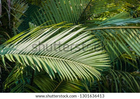 Nipa palms line the lower reaches of the Sekonyer River, where tidal inflows make the water brackish. This species can tolerate salt immersion. Further upriver pandanus palms become dominant. #1301636413