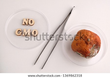 No GMO. Two Petri dishes and metal tweezers in the form of a percentage sign. Wooden letters and spoiled tangerine with mold. Concept of medical or laboratory experiments with citrus, life, health and #1369862318