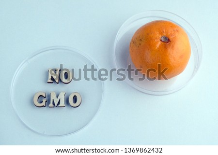 No GMO. Two Petri dishes phrase made from wooden letters and tangerine. Concept of medical research or laboratory experiments with citrus. Ecology, life, health and nutrition. Blue background. #1369862432