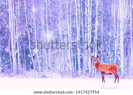 Noble deer against winter snowy forest. Artistic fairy Christmas. Winter seasonal image.