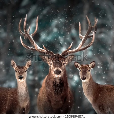 Noble deer family in winter snow forest. Artistic winter christmas landscape. Square format. #1539894071