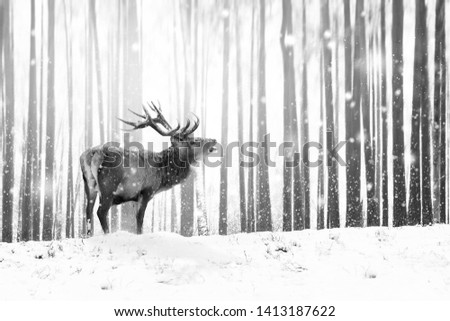 Noble deer in a winter fairy forest. Snowfall. Winter Christmas holiday image. Winter wonderland. Black and white.