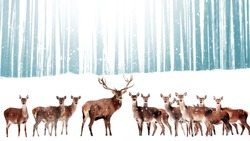 Noble deer in the background of a winter fairy forest. Snowfall. Winter Christmas holiday image. Winter wonderland.