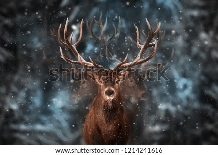 Noble deer male in winter snow forest. Multi exposure #1214241616