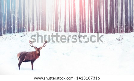 Noble deer on a background of a winter fairy forest. Snowfall. Christmas holiday image. Winter wonderland.