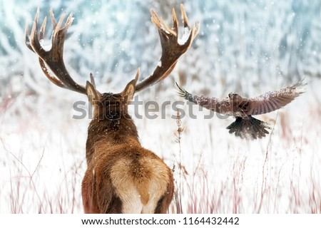 Noble deer with big horns and raven in flight in a winter fairy forest. Christmas winter image.