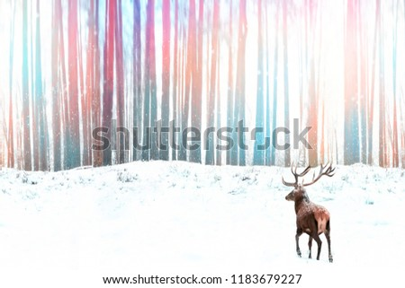 Noble red deer against a winter fantasy colorful forest. Winter artistic christmas image.