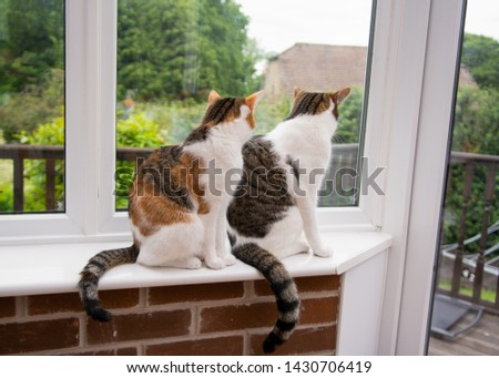 Non identical twin cats looking out of a house window. In the bottom right hand corner you see why. #1430706419