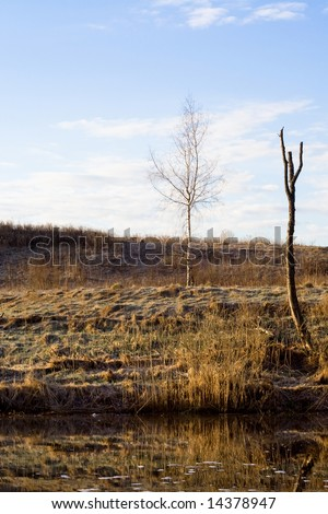 Non-urban landscape with two different leafless trees