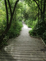 Norfolk England. Norfolk Broads  with a boardwalk leading into a leafy woodland. Light shining through trees. No people