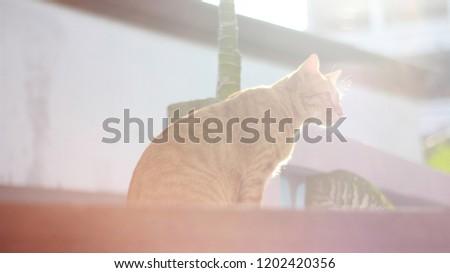 normal cat waiting