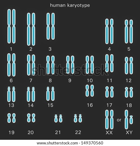 Normal human karyotype which is the diploid pairing of the chromosomes dependant upon their number size and coding and controls inherited characteristics in genetics