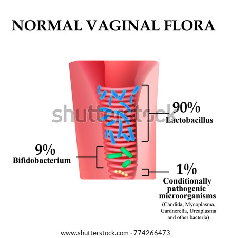 Normal microflora of the vagina. Normocenosis of the vagina. The ratio of lactobacilli, bifidobacteria and conditionally pathogenic bacteria. Infographics. illustration on isolated background