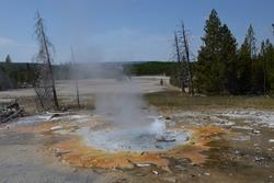 Norris Geyser Basin In Yellowstone National Park, Wyoming, USA