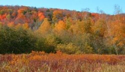 North america fall landscape eastern townships Bromont Quebec province Canada