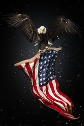 North American Bald Eagle flying with American flag. Freedom and democratic concept.