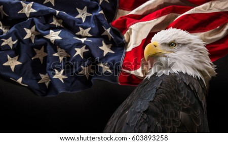 North American Bald Eagle with Flag.